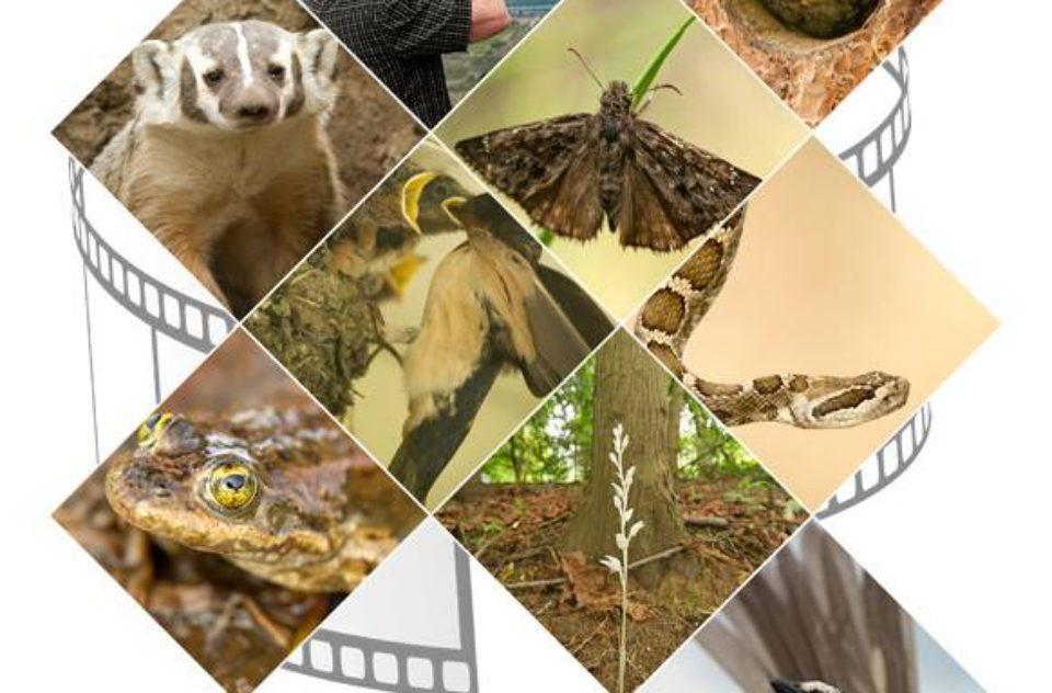 Species at Risk poster