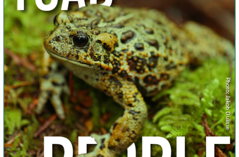 Toad People project