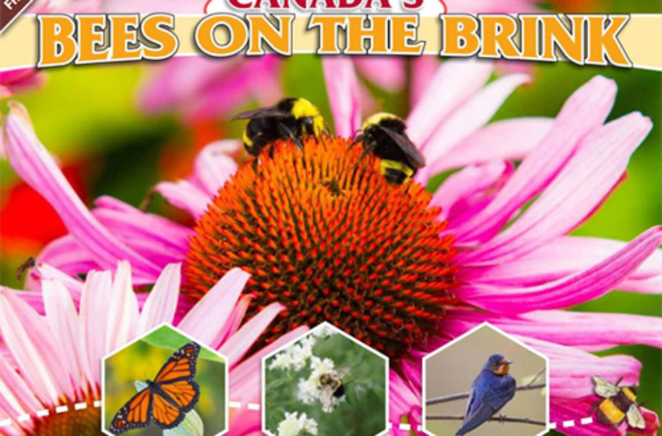 Save the Bees report
