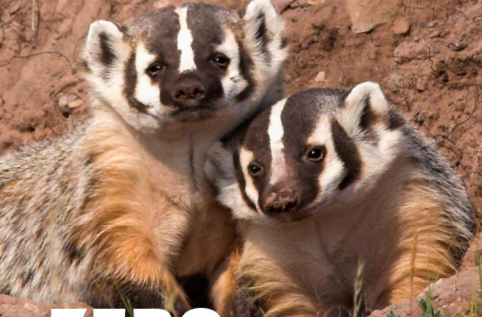Species at Risk poster set